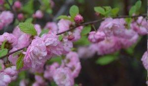 В Челябинск пришла весна