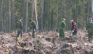 Всероссийский день посадки деревьев в Челябинске