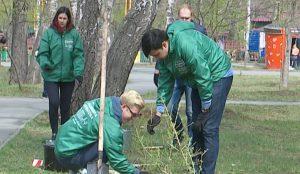 В Саду Победы будут расти 100 даурских лиственниц