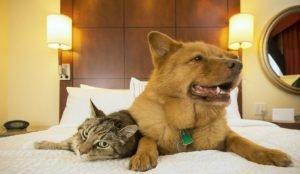 Челябинск в лидерах по числу отелей, где принимают с животными
