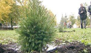 Озеленительный бум в Челябинске