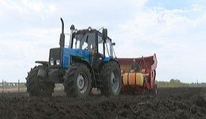 По голландской технологии сеют картофель в Еткульском районе