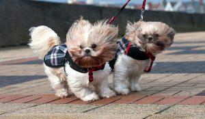 Южноуральцев предупредили об усилении ветра