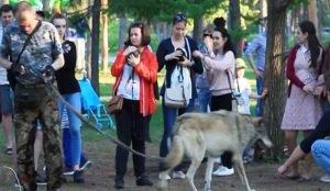 Волк в парке