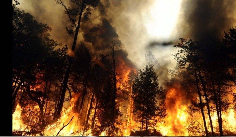 Количество лесных пожаров вЧелябинской области возросло всемь раз