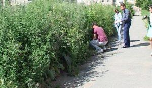Конопля возле чебаркульской школы