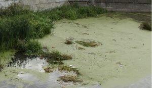 Русло реки Миасс в Челябинске очистят от мусора и камышей