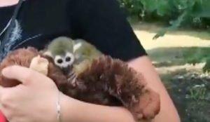 От маленькой обезьянки отказалась мать