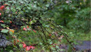 Дожди и грозы на этой неделе ожидаются на Южном Урале