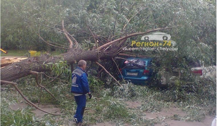 В Челябинске дерево придавило 3 автомобиля