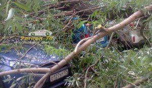 В Челябинске дерево похоронило под собой 3 автомобиля