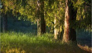 В лесу под Миассом найдена мертвая женщина