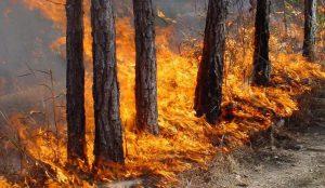 На Южном Урале будут судить подростка за лесной пожар