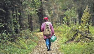 В Ашинском районе заблудились в лесу женщины с детьми