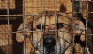 В Златоусте штраф до 500 тысяч грозит службе отлова собак