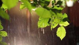 Дождливо, но тепло будет на этой неделе в Челябинской области