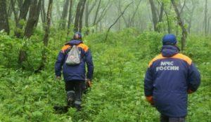 В лесу под Златоустом потерялся 82-летний грибник