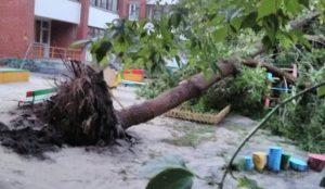 Ураган в Копейске повалил деревья с корнем