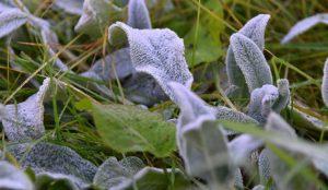 На Южном урале ожидаются заморозки до -4.