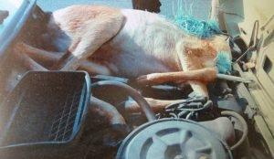 Автоинспекторы задержали браконьра в Увельском районе