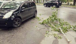 МЧС предупредило южноуральцев о штормовом ветре