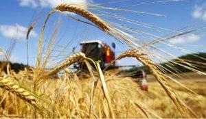 На юге Челябинской облати аграрии завершают уборку зерновых
