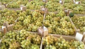 Россельхознадзор не пустил на Южный Урал 140 тонн овощей и фруктов