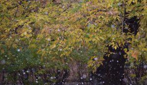 Синоптики прогнозируют, что зима придет с опозданием на месяц