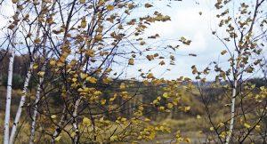 В Челябинской области усилится ветер