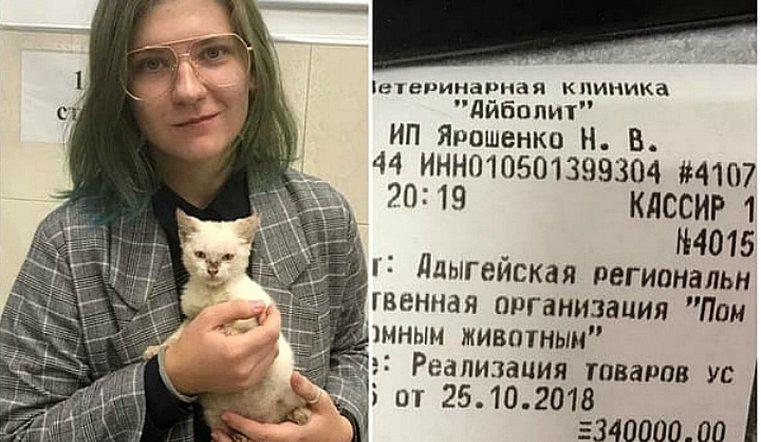 Девушка погасила большие долги волонтеров, чтобы они взяли в приют котенка