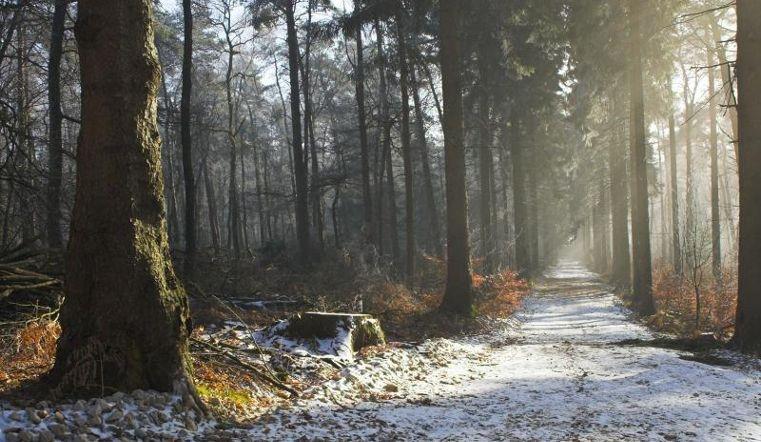 Малоснежный ноябрь на Южном Урале беспокоит специалистов