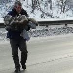 Дальнобойщик и две жительницы Пласта спасли собаку. сбитую на трассе