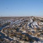 Птицефабрика травила куриным пометом жителей Магнитогорска