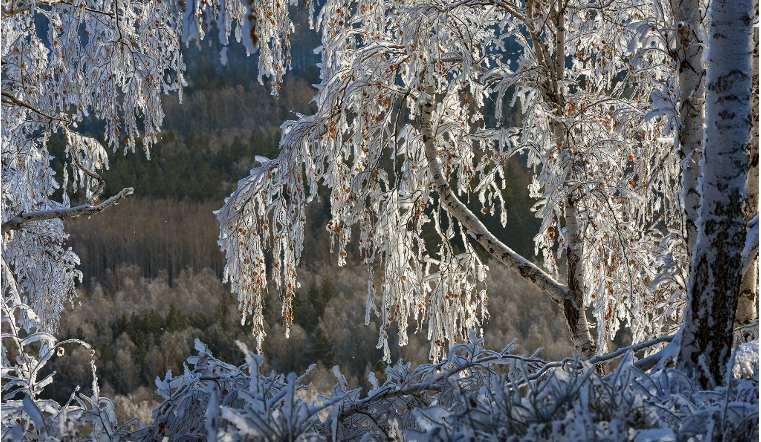 Температура в январе будет ниже климатической нормы