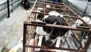 В России приняли первый закон о защите животных