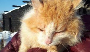 На Южном Урале появился кот-Хатико