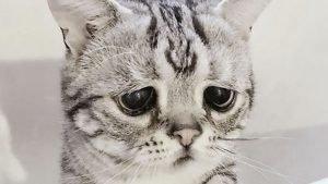 Это просто ад. Женщина морит кошек голодом и одевает их в детскую одежду