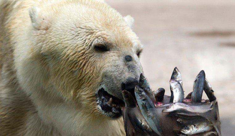 Питомцы челябинского зоопарка предскажут, каким будет лето