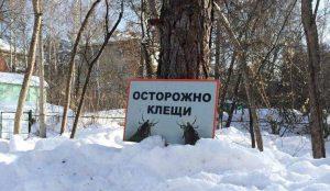 Клещи поснулись в Челябинской области