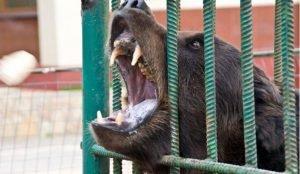 Женщина осталась без руки после того, как покормила медведя