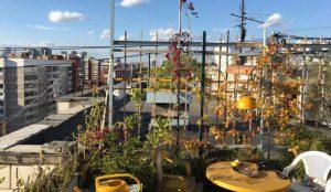 УК уничтожила сад на крыше, разбитый пенсионером
