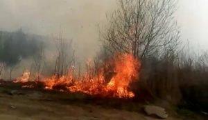 В Челябинске загорелись камыши. Пламя могло перейти на сады