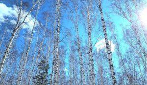На Южном Урале потеплеет до +13