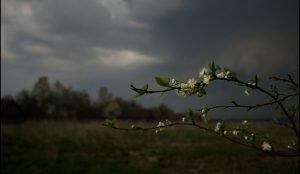 На Южном Урале ожидаются заморозки
