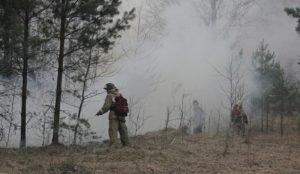 В Челябинской области ужесточили контроль за посещением лесов