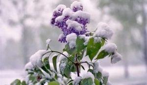 Заморозки до минус пяти ожидают на Южном Урале