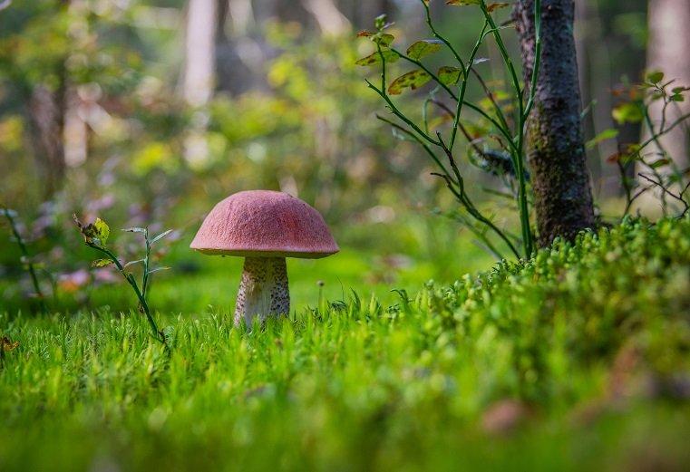 где собирать грибы в магнитогорске