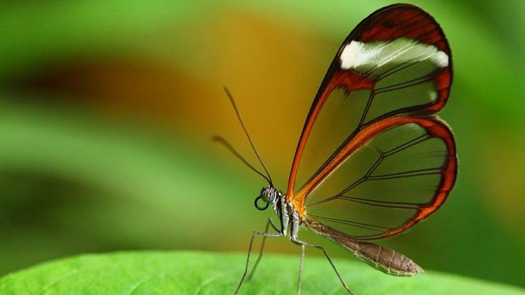 Бабочки вдохновили ученых на создание средства от слепоты