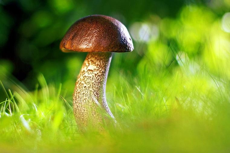 В Роскачестве рассказали, как не отравиться грибами