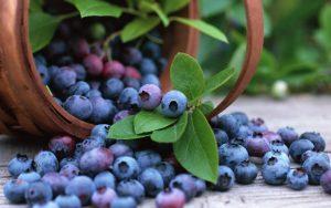 Все в лес. Эксперты рассказали, какая ягода защитит от старения, слепоты и потери памяти